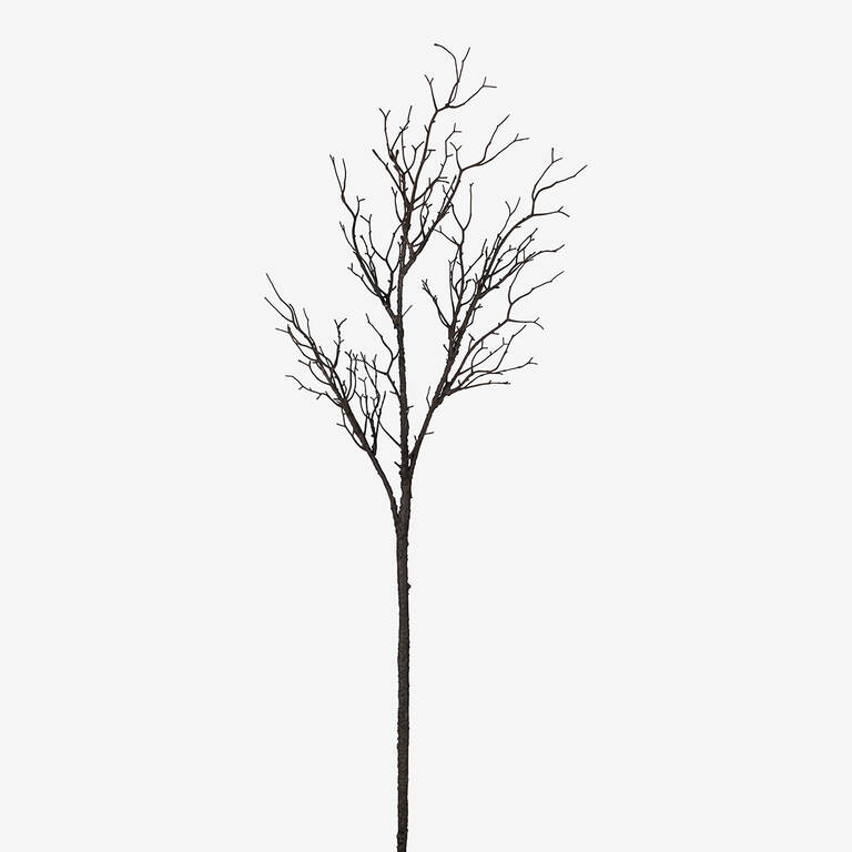 Addler Twig Branch
