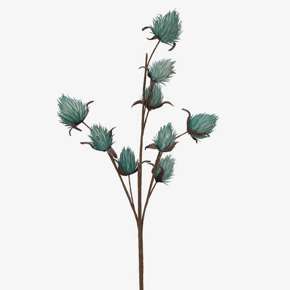 Branche de bourgeons Osha tropiques