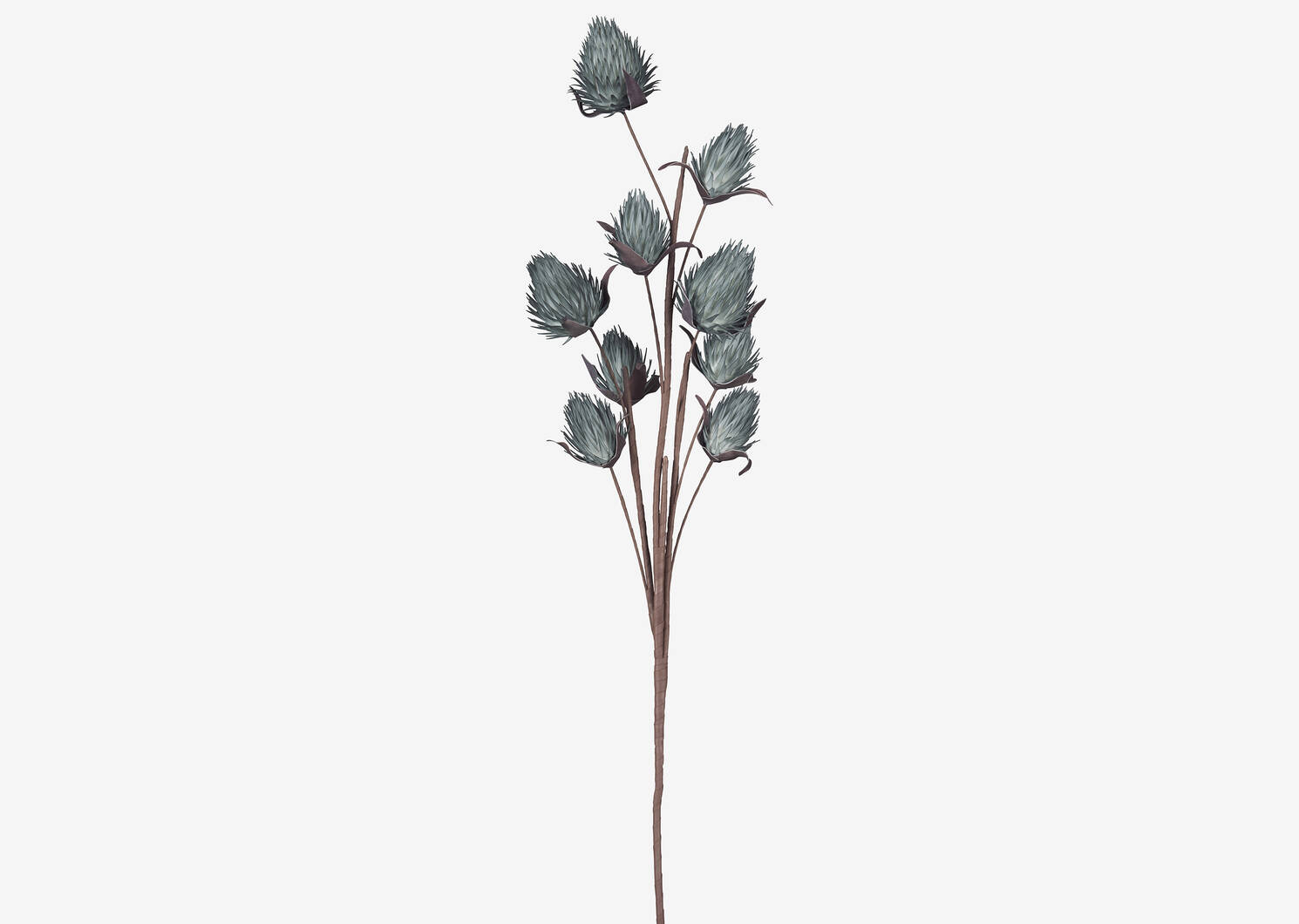 Branche de bourgeons Osha