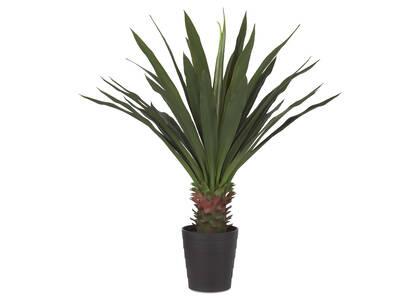 Yucca en pot Brae