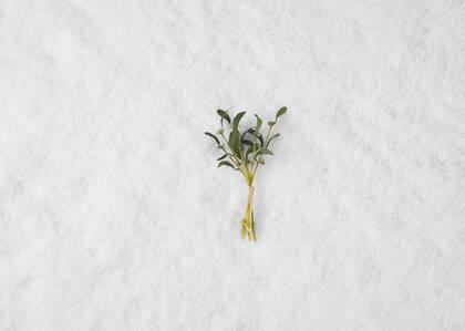 Bouquet de guis Noel
