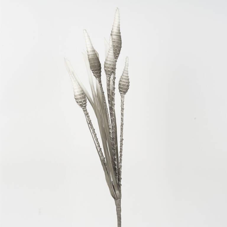 Cactus pomme de pin Valles gris/blanc