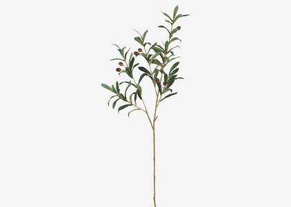 Tristin Olive Branch