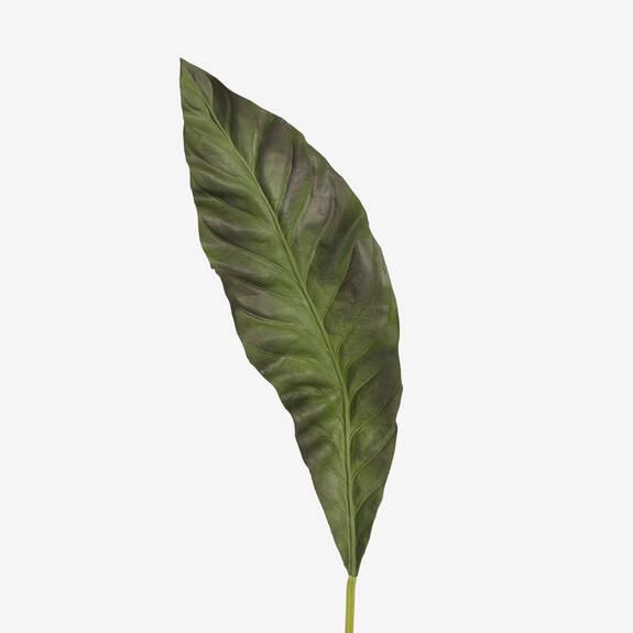 Keilani Canna Leaf Palm