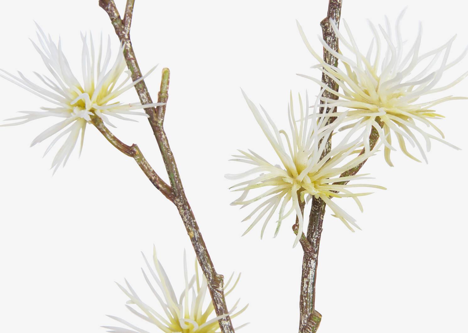Margaret Thistle Branch White