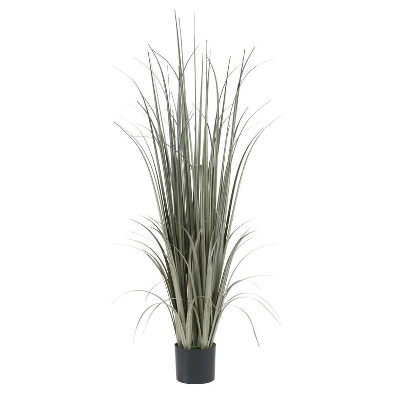 Noble Grass Potted Grey