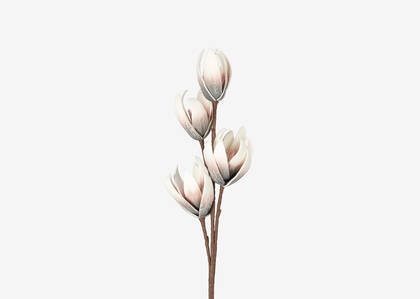 Dree Flower Stem Ballet Pink