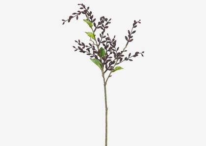 Branche de baies Adaya Porto