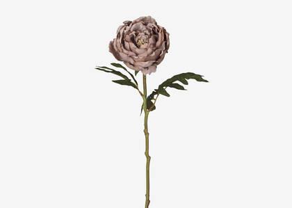 Tige de pivoine Sinay rose ballet