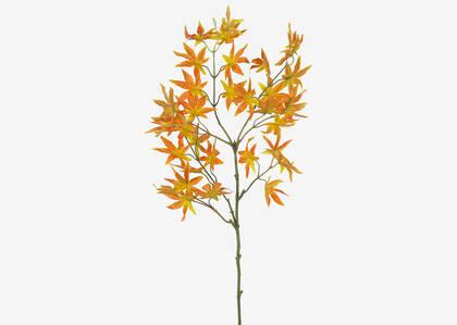 Tige de feuilles d'érable Caia
