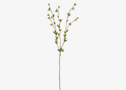 Cian Leaf Branch
